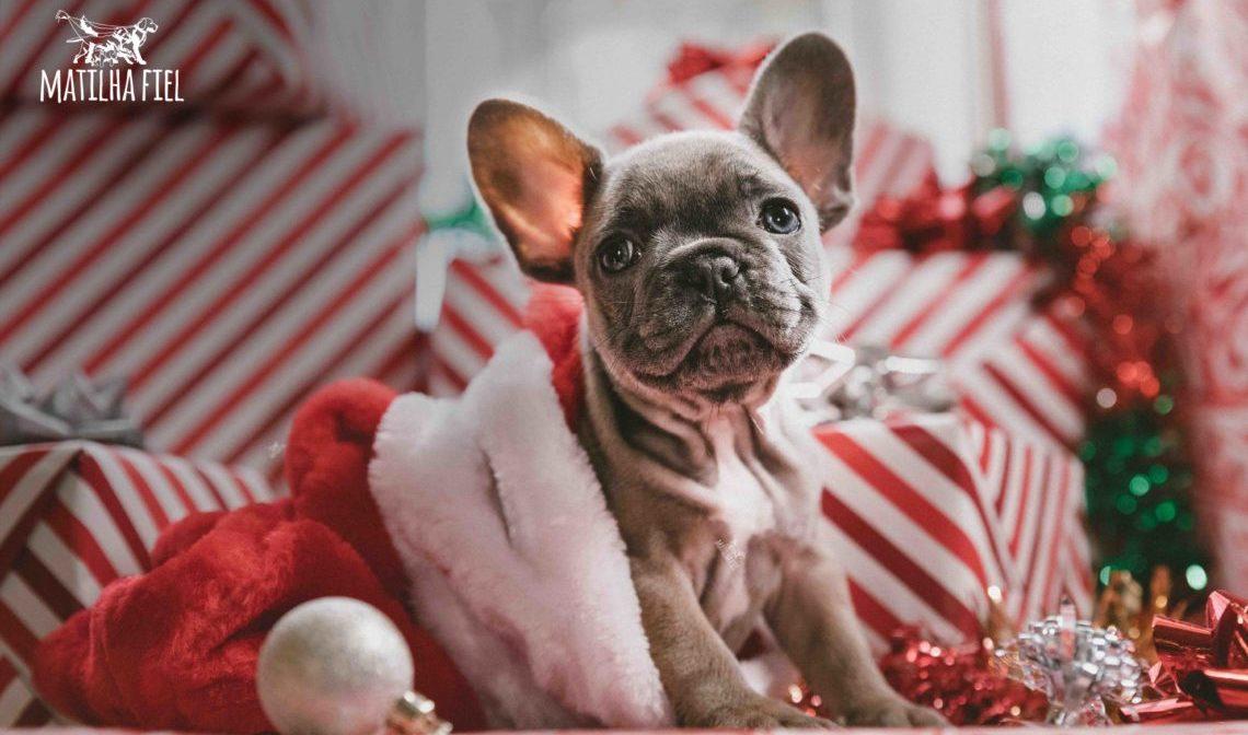 Saiba como fazer o melhor Natal para seu cachorro
