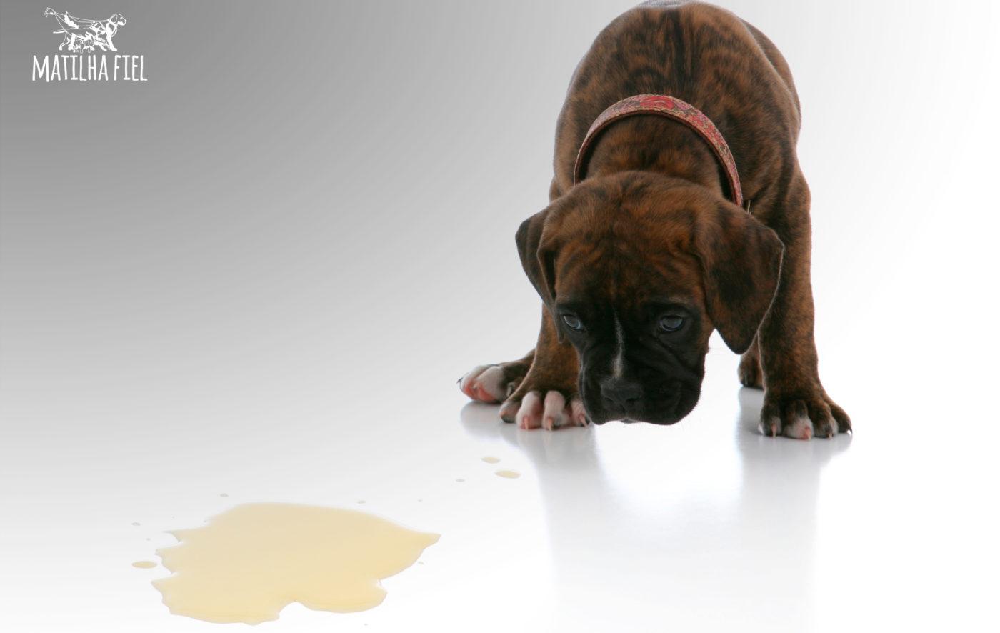 Elimine o cheiro de xixi de cachorro