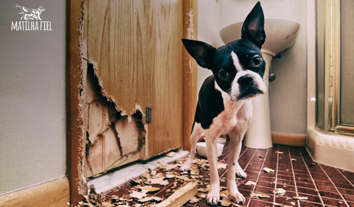 Dicas para seu cachorro não destruir tudo!