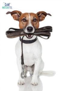 cachorro para de latir muito com exercicios