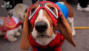 cachorro_aranha
