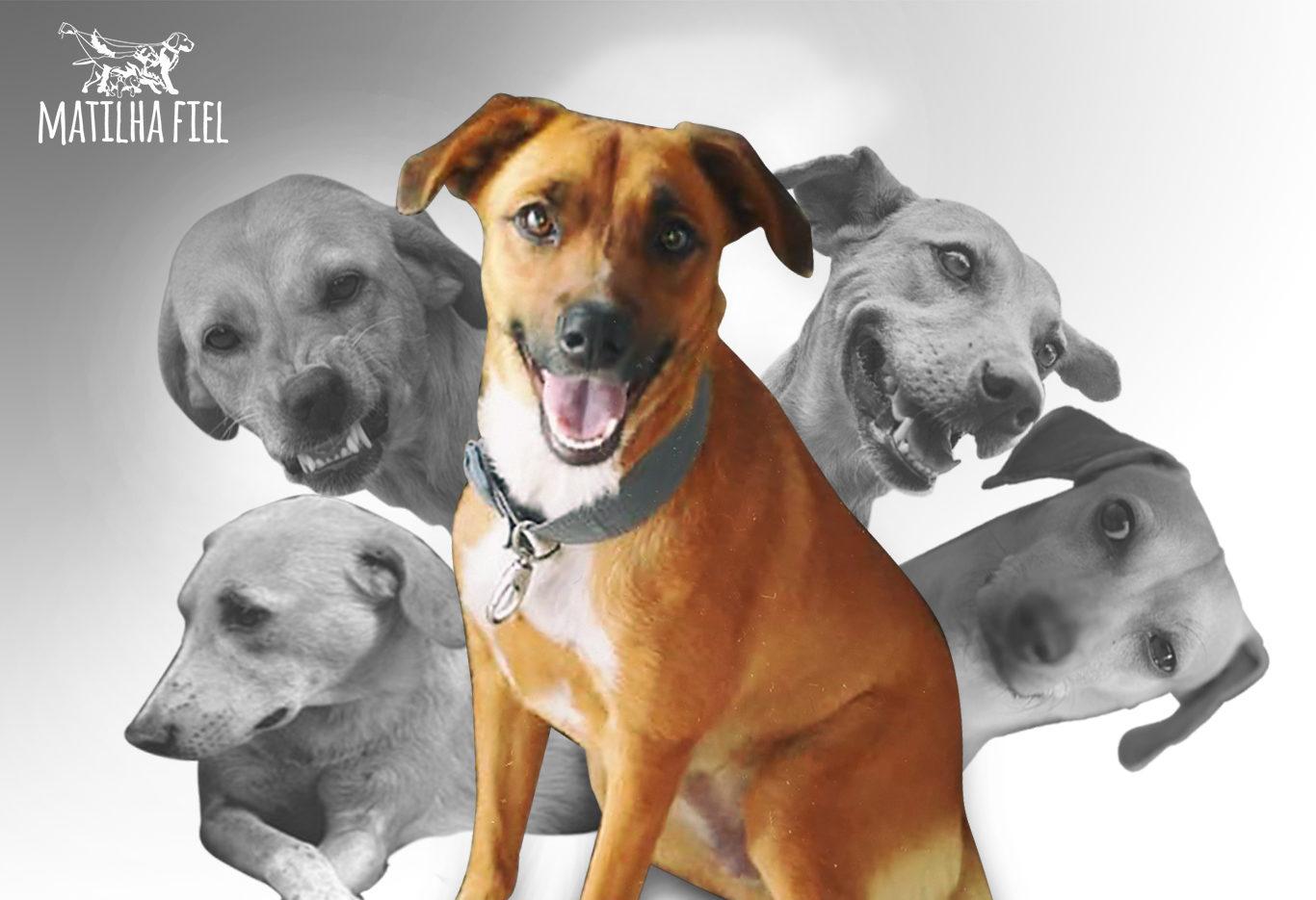 Identifique o nível de energia do seu cão instantaneamente