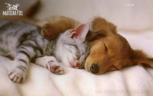 cachorro e gato filhote