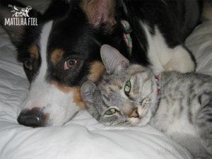 caes-gatos-melhores-amigos