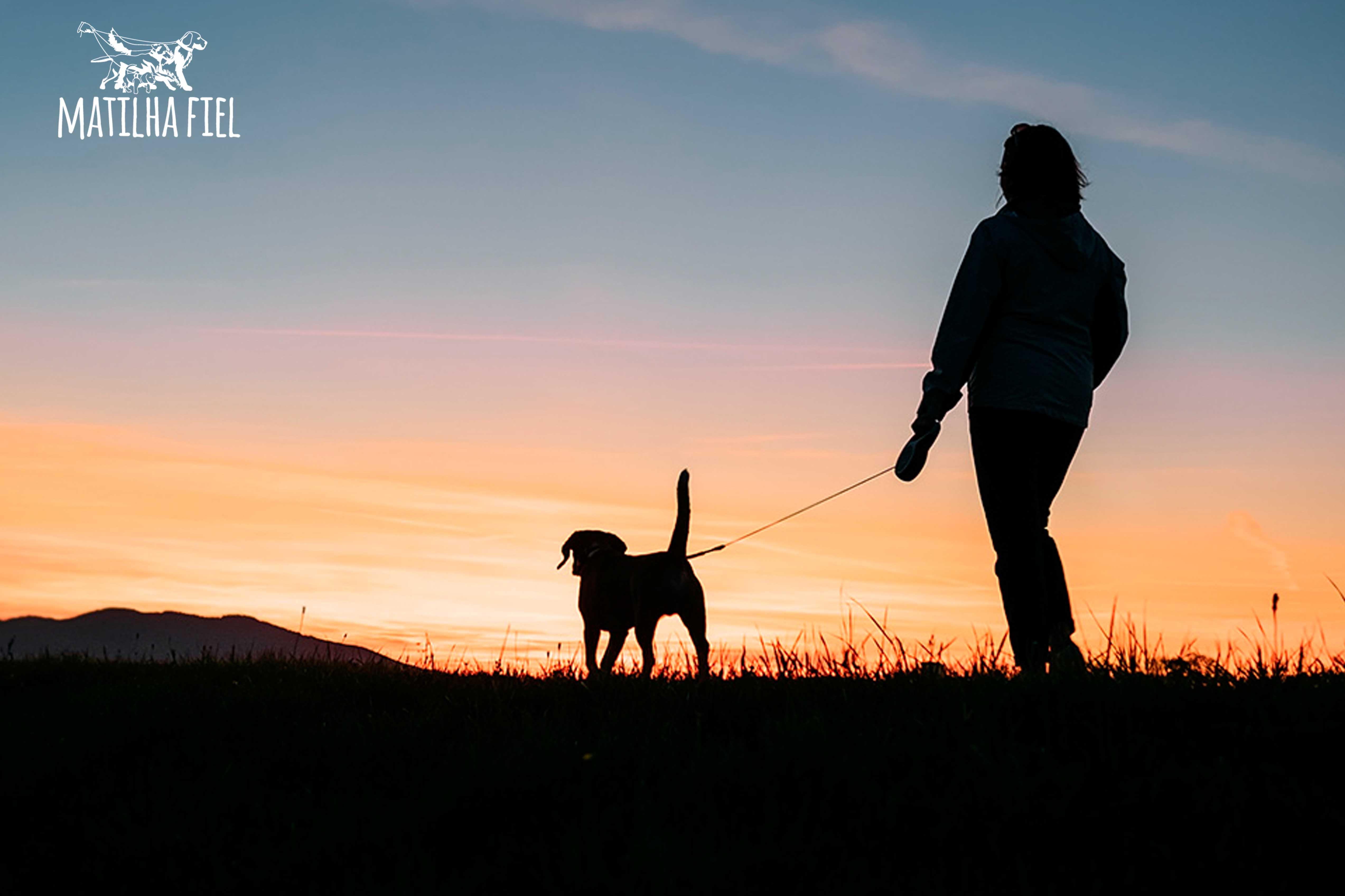 10 motivos para contratar um passeador para seu cão
