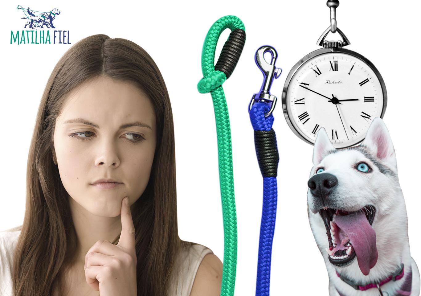Como e quando começar a passear com seu cachorro