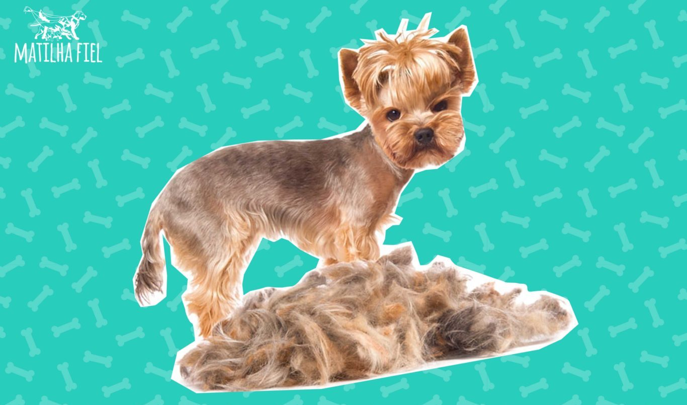 Cachorro com perda de pelo – resolva isso!