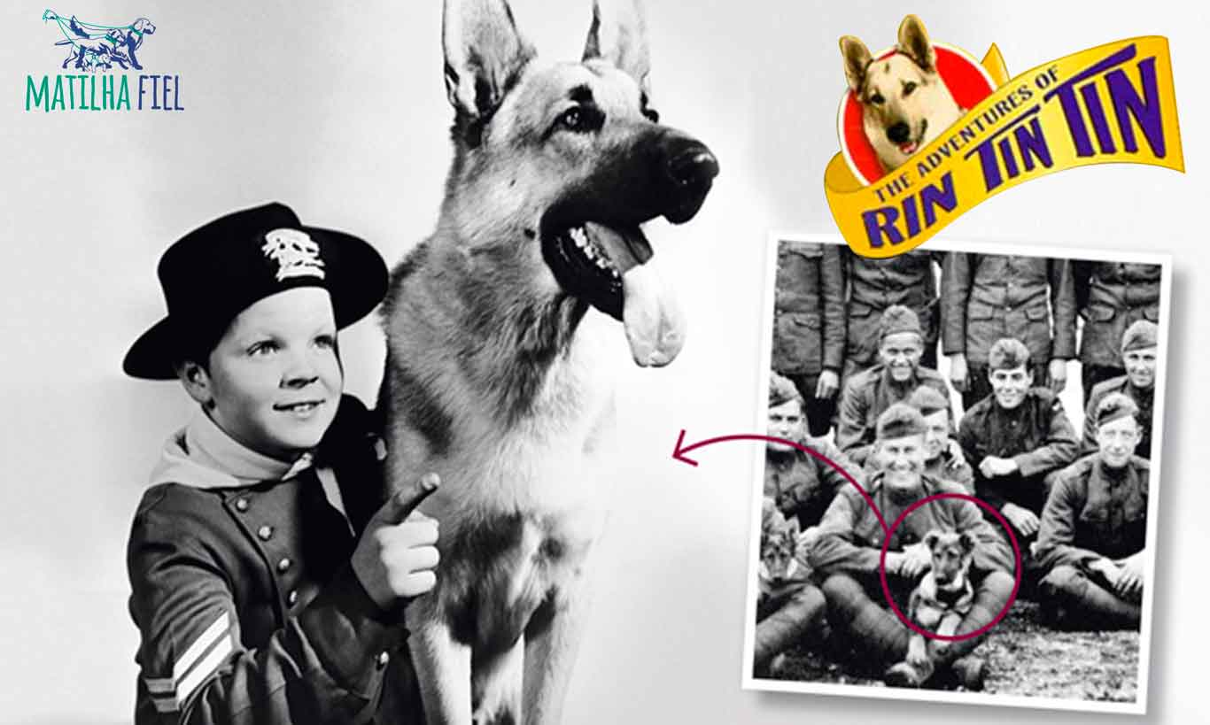 Rin Tin Tin – A história do cão mais famoso de Hollywood