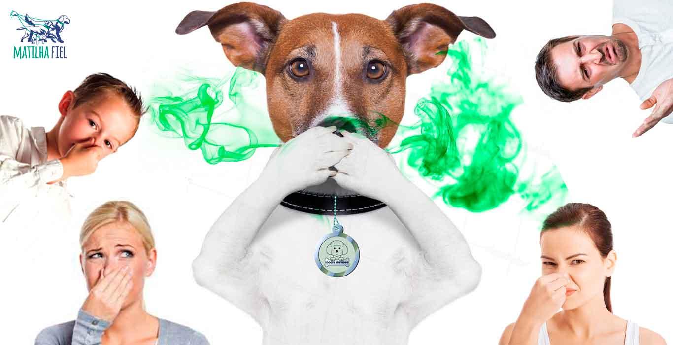 Cachorro com mau hálito: resolva!