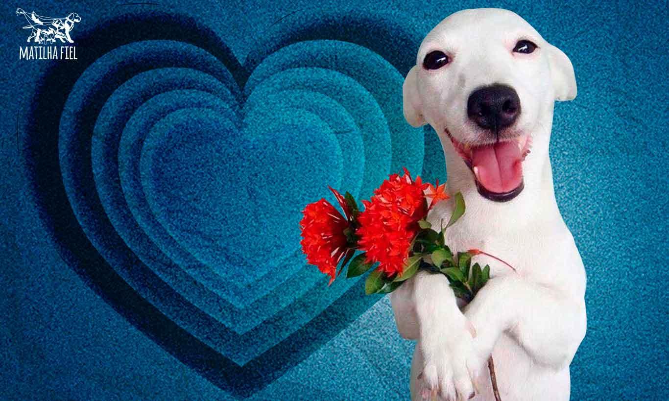5 cuidados que deve-se ter no Dia dos Namorados com o seu pet