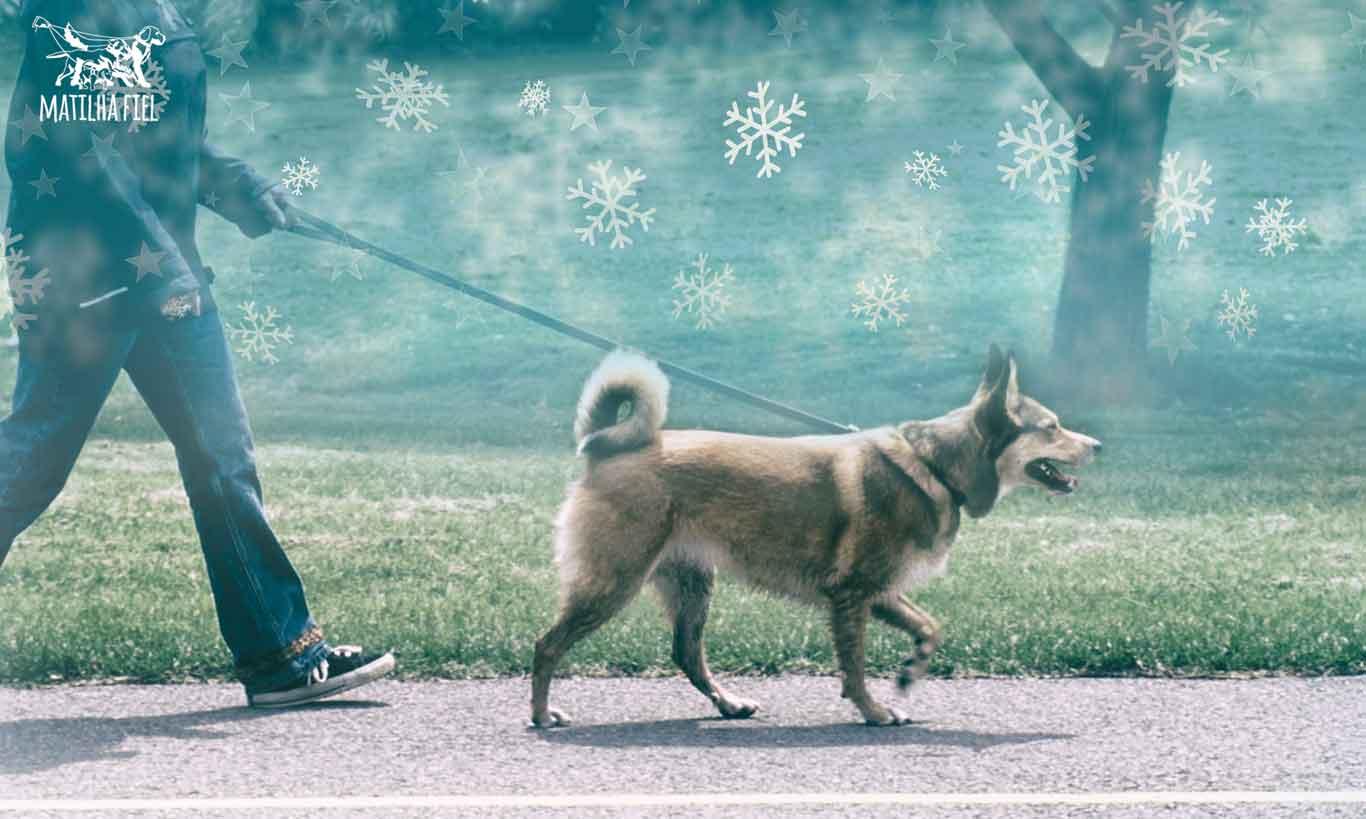 Cuidados com seu cachorro no frio
