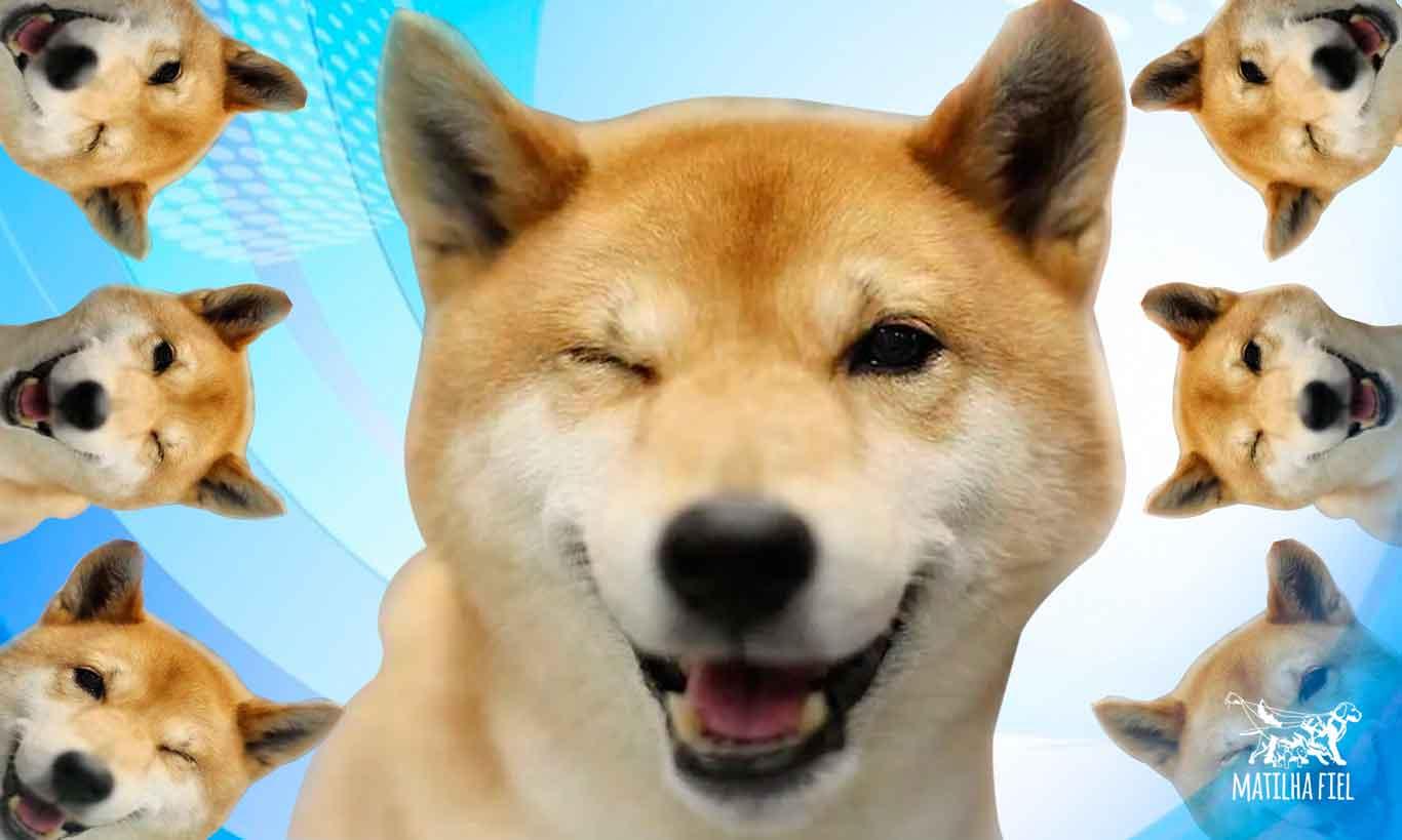 Cachorro não é bobo
