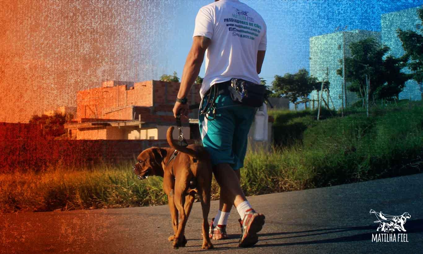 Como melhorar o passeio com seu cão