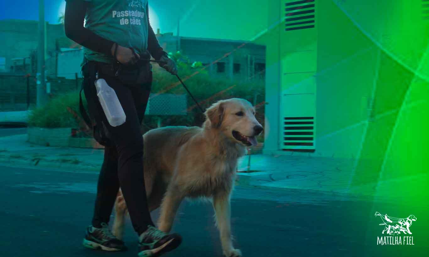 Passear com cachorro e a qualidade de vida