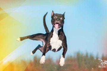 Perfil-de-cão