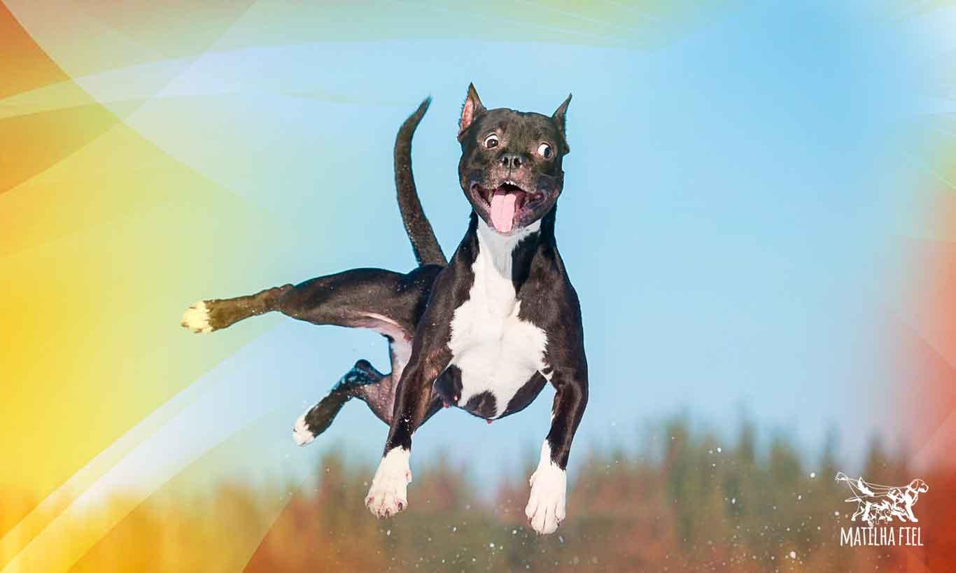 Os 3 perfis básicos de cães