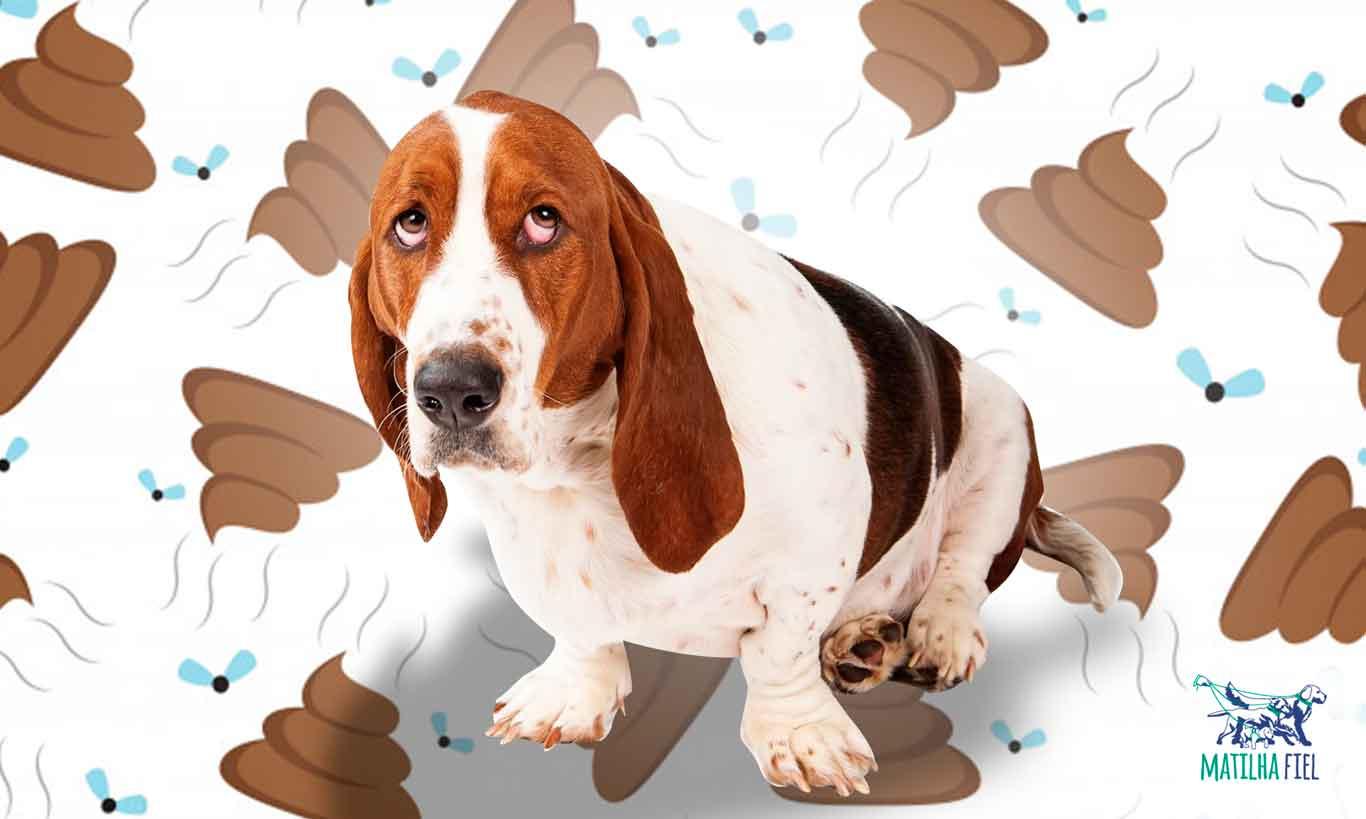 Coprofagia – Seu cão come cocô?