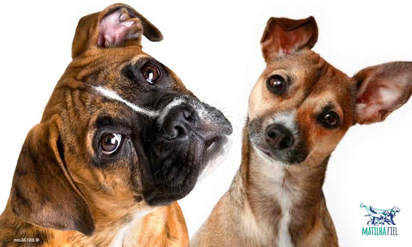 Qual a importância da atenção do seu cão?