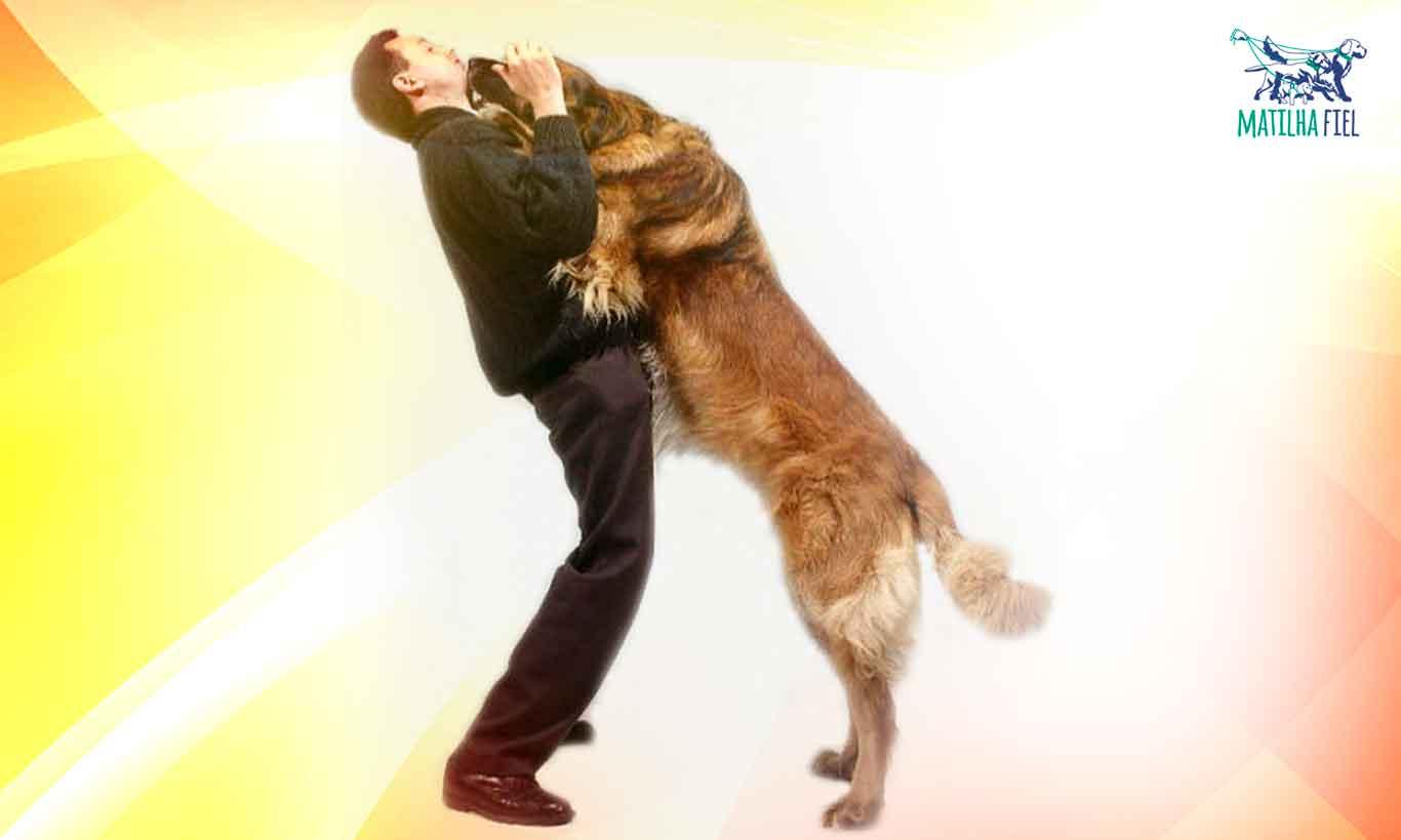 Cachorro pulando nas visitas? Nunca mais!