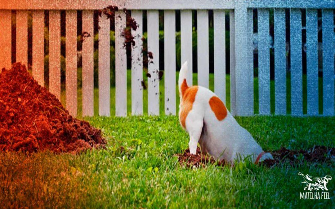Seu cachorro cava seu jardim? resolva isso.