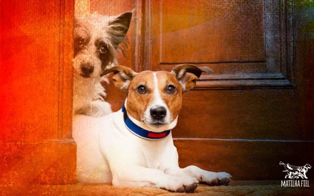 Cachorro novo no lar: faça isso da maneira certa!