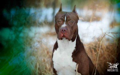 Cortar a orelha do cachorro – O que não te disseram