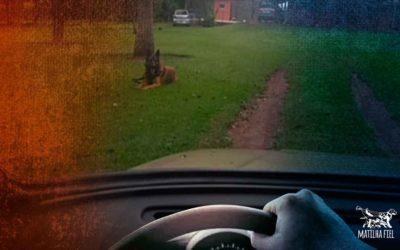 Acabe com a fuga de seu cão na garagem- ensine o comando fica