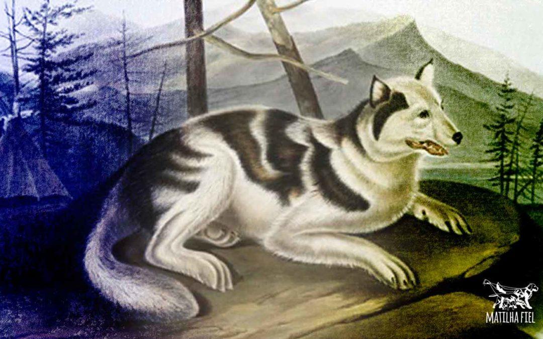 Raças extintas de cachorros: conheças as 10 mais famosas!