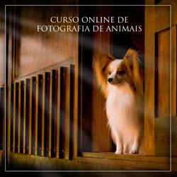 curso de fotografia animal