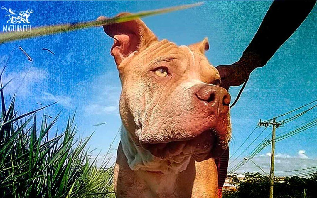 O que faz um Dog Walker?