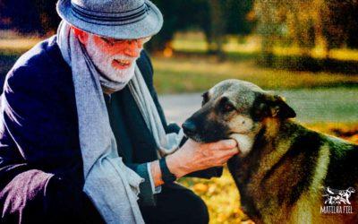 Possuir um cão ajuda a rejuvenescer até 10 anos