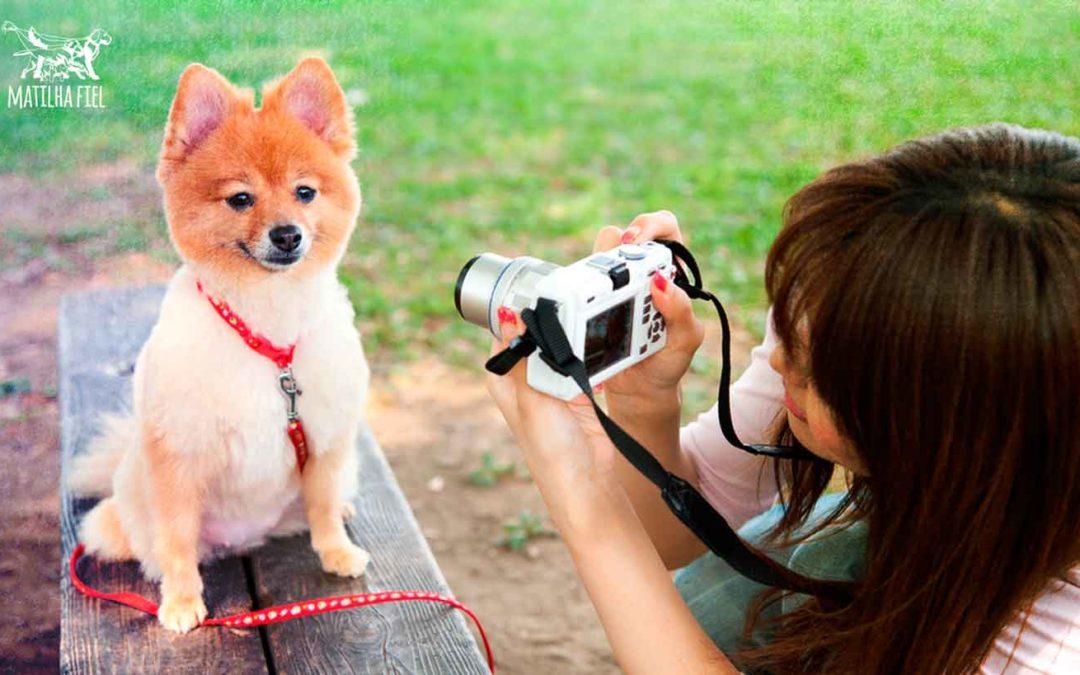 Fotógrafos: fotografia para pets – Mude sua vida!