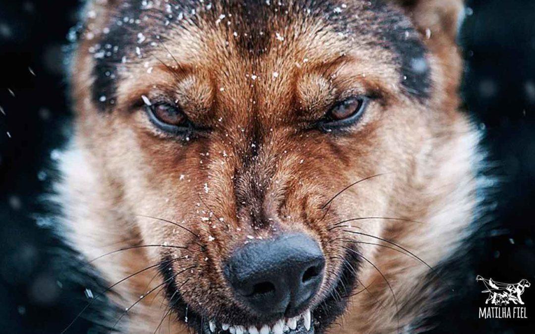 3 coisas que irritam seu cão e você faz sem saber