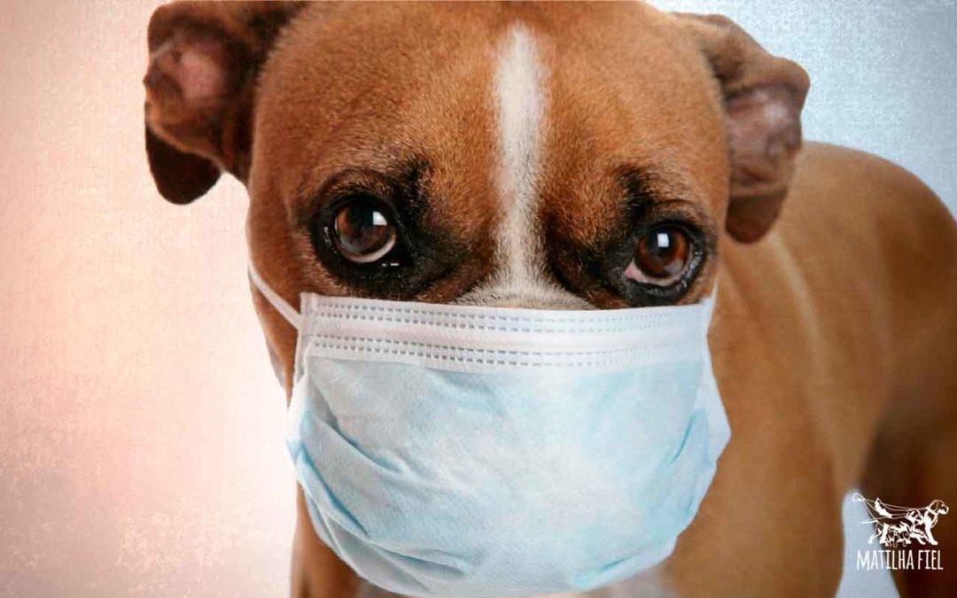 Gripe canina: o que é, como prevenir e tratar