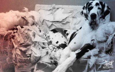 Seu cão destrói sua casa? Acabe com isso